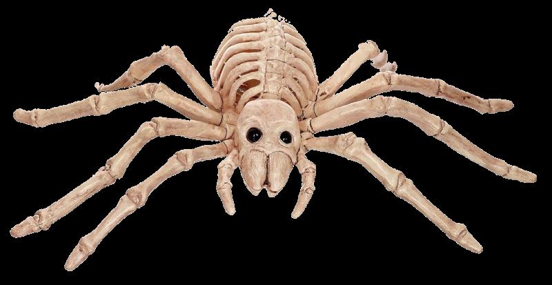 boo-gleech, Skeleton