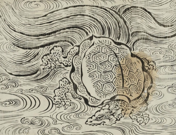 Hairy tailed turtle